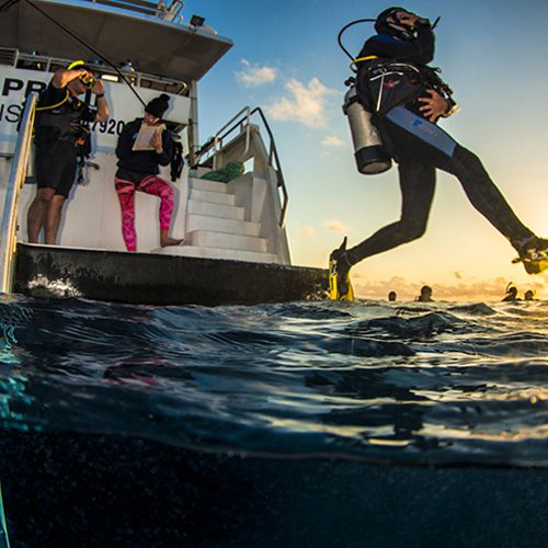 PADI Advanced dive course cairns