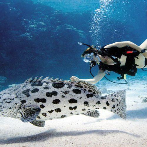 Mike Ball Spoilsport Cod Hole Coral Sea