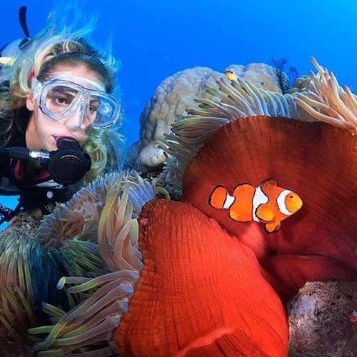 Cairns Dive Reef
